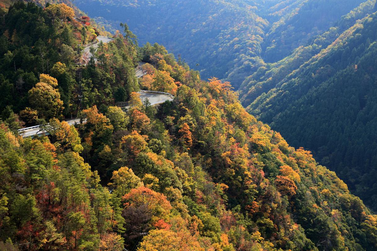 京都の嵐山高雄パークウェイの写真